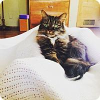 Adopt A Pet :: Abigail - Toronto, ON