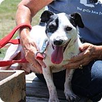 Adopt A Pet :: Calpurnia - Elyria, OH