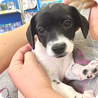 Adopt A Pet :: Glenn - Brea, CA
