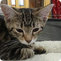 Adopt A Pet :: Marta - Great Mills, MD