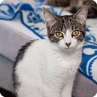 Adopt A Pet :: Whiskey - Martinsville, IN
