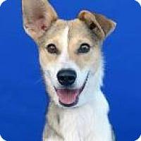 Adopt A Pet :: Katrina - Covington, LA