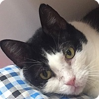 Adopt A Pet :: Frijole - Norwalk, CT