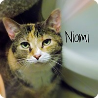 Domestic Shorthair Cat for adoption in Defiance, Ohio - Niomi