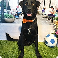 Adopt A Pet :: Lesta - Castro Valley, CA