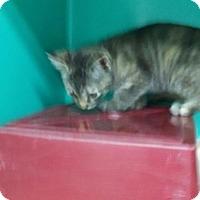 Adopt A Pet :: Mistletoe - Maquoketa, IA