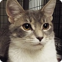 Adopt A Pet :: Holly - Grants Pass, OR