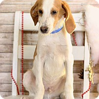 Adopt A Pet :: Jeff - Waldorf, MD