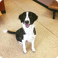 Adopt A Pet :: bruno - Marion, IN