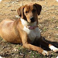 Adopt A Pet :: Hailey - Washington, DC