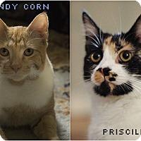 Adopt A Pet :: Candycorn and Priscilla - Richmond, VA