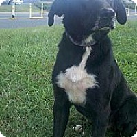 Adopt A Pet :: Duke - Albemarle, NC