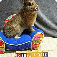 Adopt A Pet :: Elwood - Newport, DE