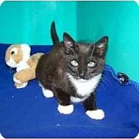 Adopt A Pet :: Sibby - Secaucus, NJ