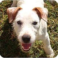 Adopt A Pet :: JB - Phoenix, AZ