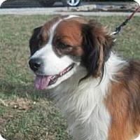 Adopt A Pet :: Poncho - Brattleboro, VT