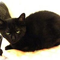 Adopt A Pet :: Choo Choo - Shelton, WA