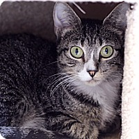 Adopt A Pet :: Jerrica - Chicago, IL