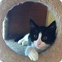 Adopt A Pet :: Milton - St. Louis, MO