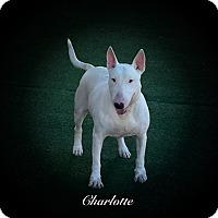 Adopt A Pet :: Charlotte - Sachse, TX