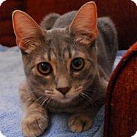 Adopt A Pet :: Adriana - Satellite Beach, FL