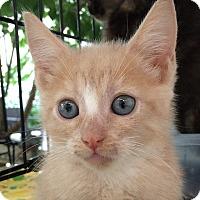 Adopt A Pet :: Sunny - Brooklyn, NY