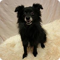 Adopt A Pet :: SALEM - New Cumberland, WV