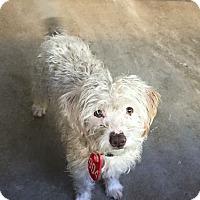 Adopt A Pet :: Conrad - Pitt Meadows, BC
