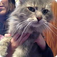 Adopt A Pet :: Grace - Rockford, IL