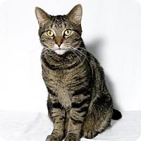 Adopt A Pet :: Mason - Lufkin, TX