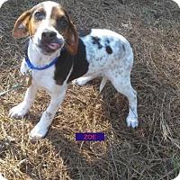 Adopt A Pet :: Zoe - Berkeley Heights, NJ