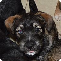 Adopt A Pet :: Renn - Memphis, TN