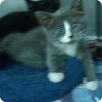 Adopt A Pet :: MAZE - Glen cove, NY