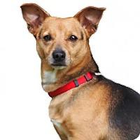 Adopt A Pet :: Hercules - Palo Alto, CA