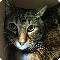 Adopt A Pet :: Jinx - Fort Collins, CO