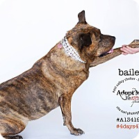 Adopt A Pet :: Ambassador Bailey - Los Angeles, CA