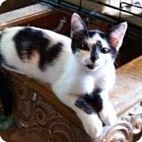 Adopt A Pet :: Micky Moo - East Brunswick, NJ