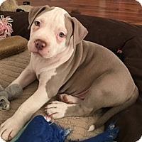 Adopt A Pet :: Buster - Woodland, CA