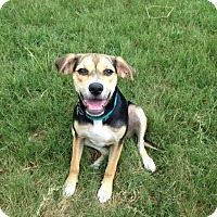 Adopt A Pet :: Zooey - Knoxville, TN
