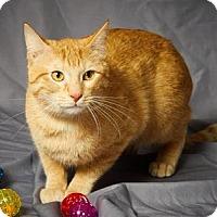 Adopt A Pet :: Zander - Tulsa, OK