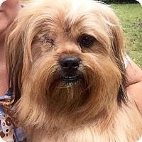 Adopt A Pet :: Benji - Shaw AFB, SC
