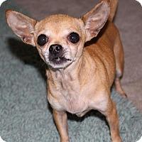 Adopt A Pet :: Abby - Durham, NC