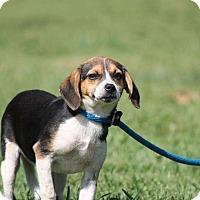 Adopt A Pet :: Sunny - Ashville, OH