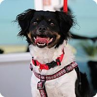 Adopt A Pet :: Jasper - South El Monte, CA