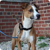 Adopt A Pet :: Jaina - Richmond, VA