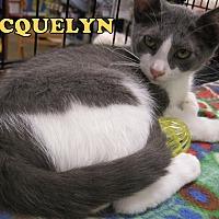 Adopt A Pet :: Jacquelyn - Alhambra, CA