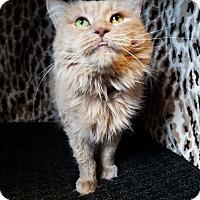 Adopt A Pet :: Mia - Hamilton, ON
