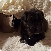 Adopt A Pet :: Sweet Tater PIe - Homer, NY