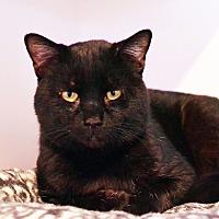 Adopt A Pet :: Ben - Lincoln, NE
