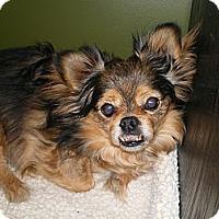 Adopt A Pet :: Fester - Apex, NC